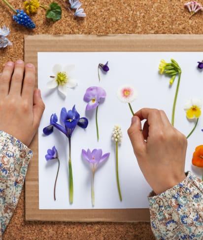 Bastelideen für den Sommer: Kind legt Blüten zum Pressen bereit