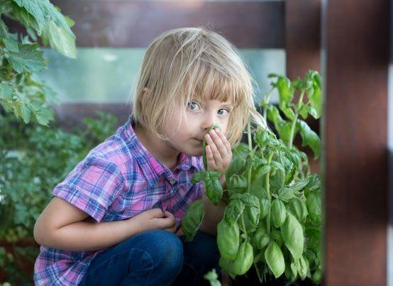 Gärtnern mit Kindern: Basilikum anpflanzen