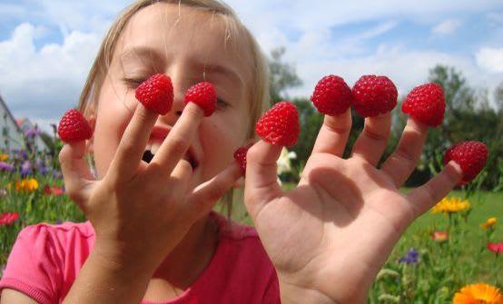 Gärtnern mit Kindern: Himbeeren anpflanzen